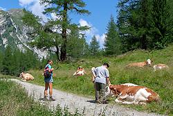 THEMENBILD - Deutsche Wanderin stirbt nach Kuh-Attacke, Landwirt muss mehr als 180.000 Euro bezahlen. Mit massiven finanziellen Folgen hat ein Bauer zu kämpfen, dessen Kuhherde eine deutsche Hundehalterin zu Tode getrampelt hat. Ein Gericht in Österreich sorgte mit seinem Urteil für Aufsehen. Die 45 Jahre alte Hundehalterin aus Rheinland-Pfalz war im Sommer 2014 im Tiroler Stubaital von der Kuhherde, die offenbar die Kälber vor dem Hund schützen wollte, zu Tode getrampelt worden. Die Frau hatte laut Gericht die Hundeleine mit einem Karabiner um die Hüfte fixiert. Bild Aufgenommen am 30.07.2006 // German wanderer dies after cow attack, farmer must pay more than 180,000 euros. With massive financial consequences has a farmer to fight, whose cow herd has trampled a German dog owner to death. A court in Austria caused a stir with his judgment. The 45-year-old dog owner from Rheinland-Pfalz was trampled to death in summer 2014 in the Tyrolean Stubai Valley by the herd of cattle, who apparently wanted to protect the calves from the dog. The woman had loud court the dog leash with a carabiner around the waist fixed. Picture taken on 30.07.2006. EXPA Pictures © 2019, PhotoCredit: EXPA/ Johann Groder