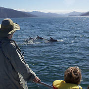 Tourists watch dolphins in playful mood in Queen Charlotte Sound, South Island, New Zealand..The dolphins are viewed by tourists on a 'swimming with Dolphins' trip with Dolphin Watch Eco Tours, run out of Picton, South Island, New Zealand. 27th January 2011. Photo Tim Clayton..