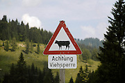 Austria, Upper Austria, Gosau village, in the Dachstein Mountains A roadsign warning agains roaming cows