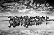 Horses Fine Art