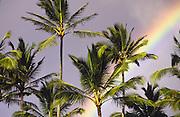 Rainbow, palm trees<br />