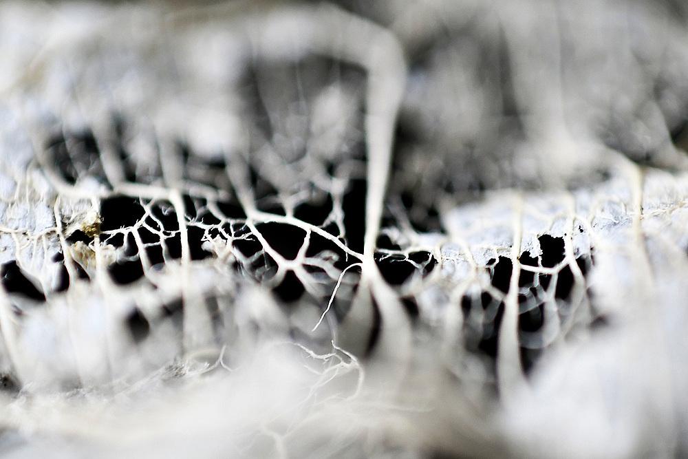 Foglia secca / dry leaves<br /> Photo Antonietta Baldassarre