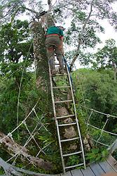 Rachel Streich Ascending Ladder Above Treetop Canopy Walkway, Tiputini