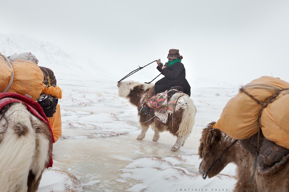 """Nemat Ullah guides his yak - his 5 years old yak name is Katchga (meaning """"beige cream"""", marron crème)..A Kyrgyz caravan on its way to the lower valley, between the camps of Ech Keli and Burgut Yor...Trekking with yak caravan through the Little Pamir where the Afghan Kyrgyz community live all year, on the borders of China, Tajikistan and Pakistan."""