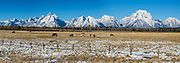In Wyoming, horses graze idyllically by a fence beneath snow-covered Grand Teton (on left 13,775 feet), the highest mountain in Grand Teton National Park. On right is Mount Moran (12,605 feet). This image was stitched from multiple overlapping photos.