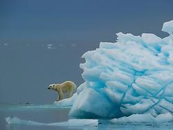 Polar bear (Ursus maritimus) on a ice berg, Nordaustlandet, Svalbard