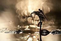 Vagrant Darter in its habitat, Cerambyx cerdo<br /> Danub; Gornje Podunavlje; Ramsar site; Serbia; floodplains; hard woods; hardhout ooibos; rivers; special nature reserve; upper Danub; wetlands; Cerambyx cerdo
