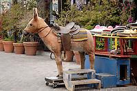 Burro Donkey Horse at Olvera Street, Los Angeles, California