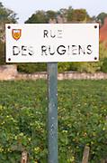 Rugiens sector. Pommard, Cote de Beaune, d'Or, Burgundy, France