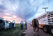 Woodward, OK - Rancher Justin Howard recruits his friends to help with cattle branding at his ranch north of Woodard.