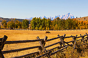 Wood Rail Fence in a Wyoming Meadow