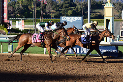 February 25, 2018 - Arcadia, CA, USA - Horses pulling up the rear of the pack at the end of the 8th race at Santa Anita Race Track, Arcadia, California, USA, February 24, 2018...Credit Image  cr  Scott Mitchell/ZUMA Press (Credit Image: © Scott Mitchell via ZUMA Wire)