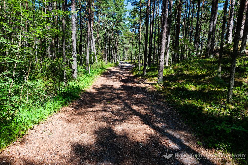 Sweden, Gotska Sandön national park. Road in forest.