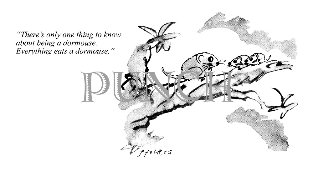 """""""There's only one thing to know about being a dormouse. Everything eats a dormouse."""""""