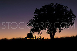 Covered wagon under a texan twilight sky