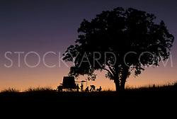 Covered wagon under a texan twilight sky