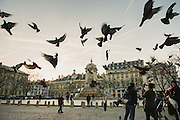 A group of pigeons is flying away at Place Saint Sulpice, Paris