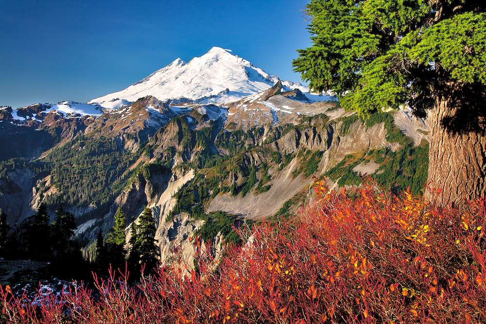 Autumn huckleberry bushes offer a colorful foreground for views of Mt. Baker from Artist's Point, in the North Cascades of Washington.