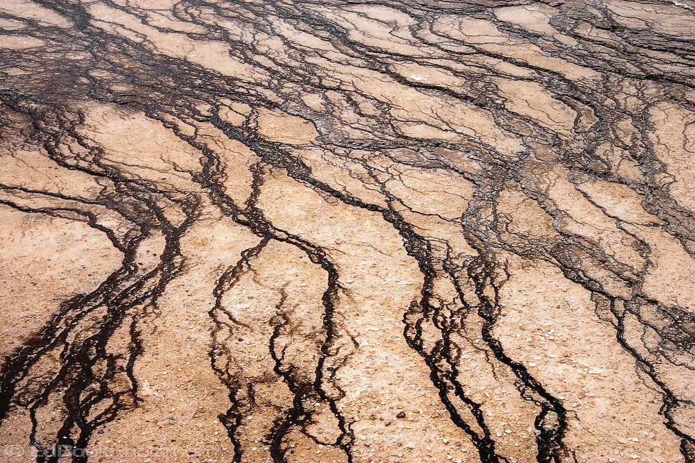 Travertine terraces at the Grand Prismatic Spring, Yellowstone National Park, Wyoming, USA.
