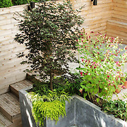Multi level garden with Spa and Outdoor Kitchen