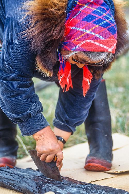 Loretta Shinugk, Yupik elder, using ulu to cut bearded seal, Shismaref Island, Bering Land Bridge National Preserve, Alaska, USA