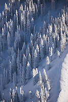 Snow covered pine trees on Maple Mountain, Utah
