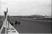 """26/06/1965<br /> 06/26/1965<br /> 26 June 1965<br /> Irish Sweeps Derby at the Curragh Race Course, Co. Kildare. Image shows """"Meadow Court"""" (L. Piggott up) jointly owned by Bing Crosby, Mrs Frank McMahon and Mr. G.M. Bell winning the Irish Sweeps Derby from """"Convamore"""" (J. Lindley up) and """"Wedding Present"""" (W. Williamson up) at the Curragh."""