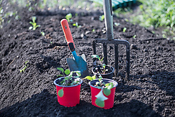 Potted plant with trowel and digging fork in field, Bavaria, Germany