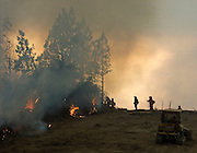 Greeley Hill, California-- July 30, 2008-Telegraph Fire-Wildfires Threaten Yosemite National Park.Department of Corrections fighters keep a watchful  on trees at  Division N during burn out. Division N is in the north east portion of the fire in the Stanislaus National Forest and North of the Merced River. .Photo by Al GOLUB/Golub Photography