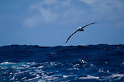 Albatross, Southern Ocean.  The albatrosses fly thousands of miles across the oceans To do this, they can lock their wings and place, and glide, rather than fly. And their heart rate is barely above resting when gliding..