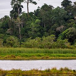 """""""Lagoa do Macuco (paisagem) fotografado em Linhares, Espírito Santo -  Sudeste do Brasil. Bioma Mata Atlântica. Registro feito em 2014.<br /> <br /> <br /> <br /> ENGLISH: Macuco Lagoon photographed in Linhares, Espírito Santo - Southeast of Brazil. Atlantic Forest Biome. Picture made in 2014."""""""