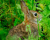Nibbler the Bunny Rabbit. Image taken with a Fuji X-T2 camera and 100-400 mm OIS lens