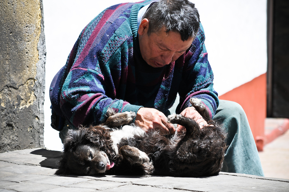 A man cares for a dog in Bogota, Colombia.
