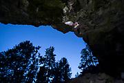 Bat (myotis sp) flying into a cave at dusk   in Central Oregon. © Michael Durham