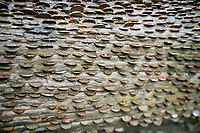 Coins in a Wishing  Trees  St Nectans Glen, Cornwall UK