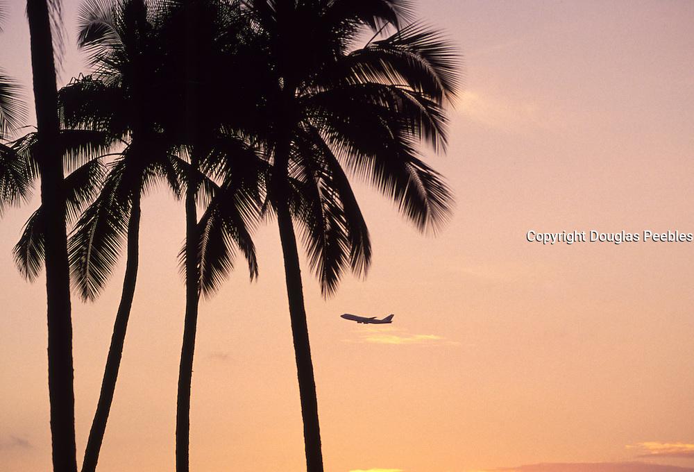Palm, airplane<br />
