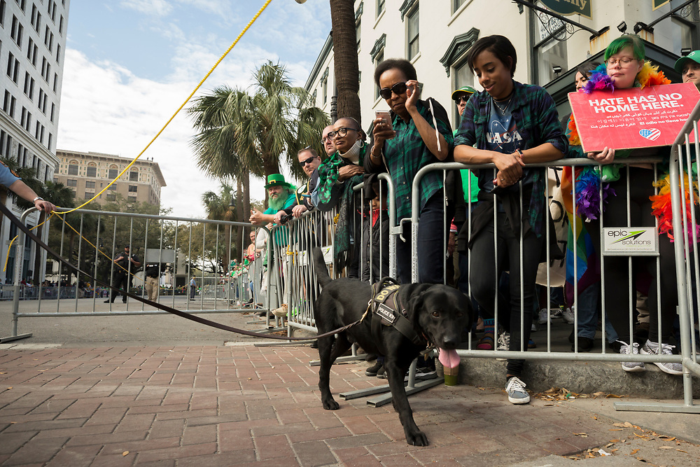 A Secret Service K9 unit patrol the area where Vice President Mike Pence is scheduled to watch the Savannah St. Patrick's Day parade, Saturday, March 17, 2018, in Savannah, Ga. (AP Photo/Stephen B. Morton)