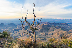 View from South Rim of Chisos Mountains into Mexico past dead tree, Big Bend National Park, Texas, USA.
