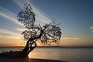 The sun rises over Tiger Key upon a mangrove tree in the Ten Thousand Islands of Everglades National Park, Camp Lulu Key.