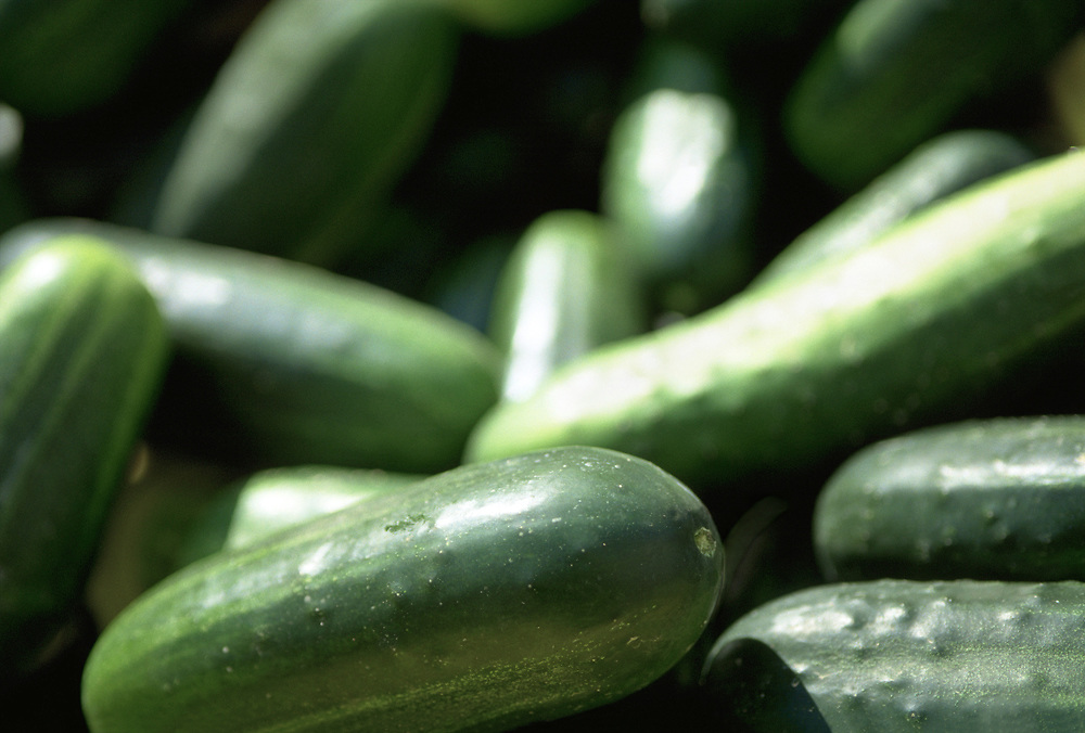 Close up selective focus photograph of a pile of cucumbers