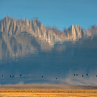 Ducks swim in a reflection of Mount Morrison and the Eastern Sierra Nevada in Big Alkali Lake in Long Valley near Mammoth Lakes, California.