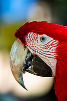 Macaw (parrot), Parque des Aves (Bird Park), Foz do Iguacu, Brazil.    <br /> <br /> Parque das Aves is the only institution in the world focused on the conservation of the beautiful and exuberant birds of the Atlantic Rainforest, offering an up-close, immersive and charming experience with them.