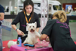 May 25, 2019 - Turin, Piedmont, Italy - Turin, Italy-May 25, 2019: Four Feet at the Fair Event of the pet dogs and cats sector at the fair (Credit Image: © Stefano Guidi/ZUMA Wire)