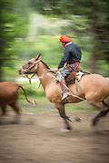 Gaucho riding on horseback, Estancia Huechahue, Patagonia, Argentina, South America