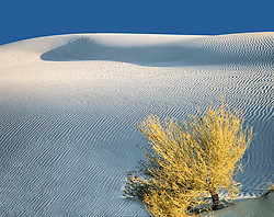 Tall dune of white gypsum with blue sky at top and rabbit brush in right corner foreground at White Sands national Monument