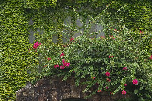 South America, Uruguay, Rocha, Parque Nacional Santa Teresa, invernaculo, conservatory, entrance, entrada