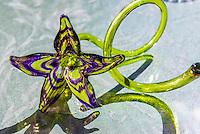 Handblown glass art, Jewell Gardens, Skagway, Inside Passage, southeast Alaska USA.