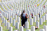 """pvc053011g/5-30-11/north.  Vietnam veteran Orlando Trujillo (CQ), of Santa Fe, who served in the Marine Corps from 1967-1971, carries flowers while looking for the graves of his father in-law Toribio Urioste, and Orlando's step father Jose Romero (Accent on """"e"""" in Jose), at the Santa Fe National Cemetery, photographed on Memorial Day Monday May 30, 2011.  Orlando said Toribio Urioste served during WWII at Normandy, and Jose Romero served in Korea.  (Pat Vasquez-Cunningham/Journal)"""