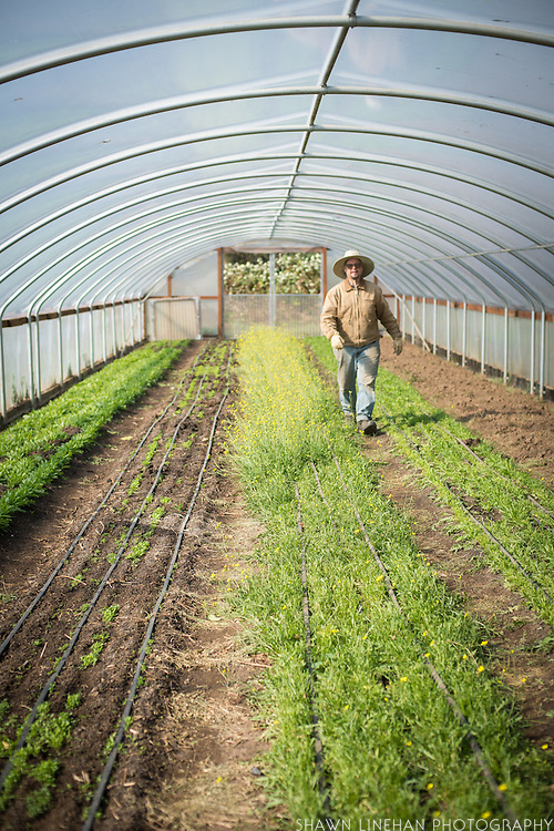 Bryan Dickerson inside greenhouse.