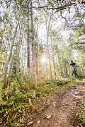 Mountain biker jumps through aspens on trails near Breckenridge, Colorado.